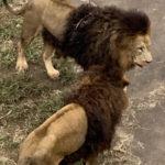 多摩動物公園を周るのにかかる所要時間はどれぐらい?1人で早歩きでも結構かかるよ!